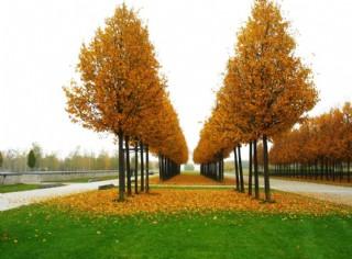 秋季景色圖片