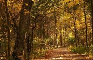 秋季樹林圖片