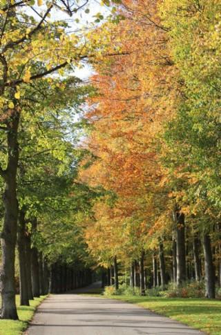 秋天景色圖片